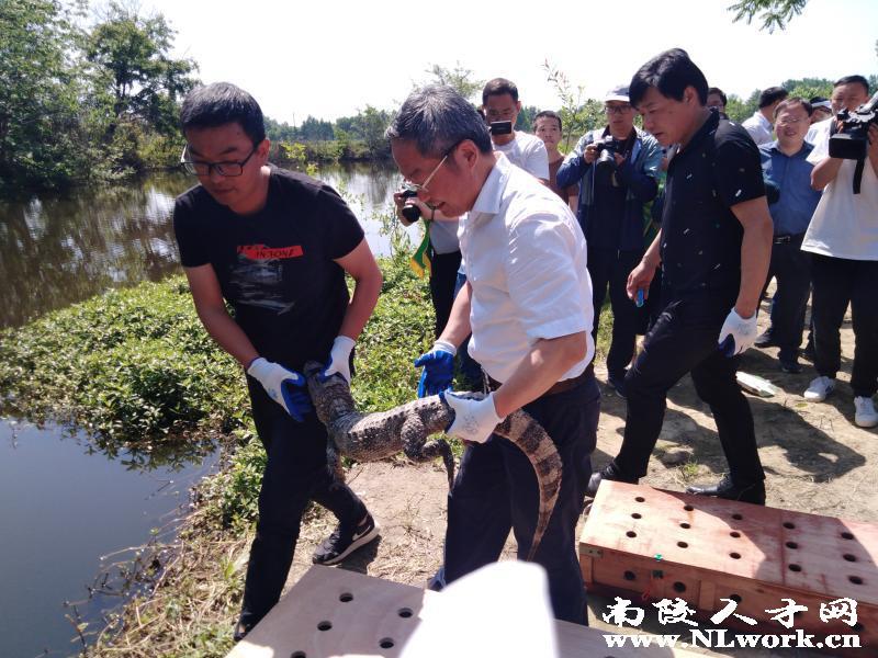 2020年南陵县视频连线扬子鳄野外放归活动